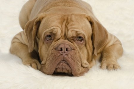 reremove urine odor from rug