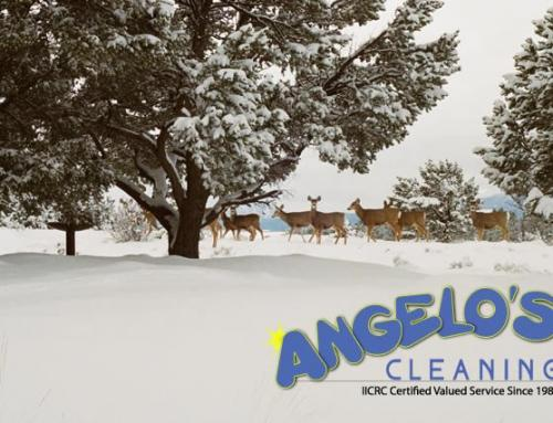 Why Angelo's is the best choice for your winter carpet cleaning needs!