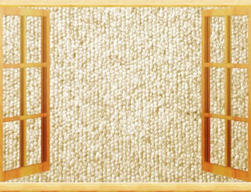 Maintaining the life of your Apartment's Carpet